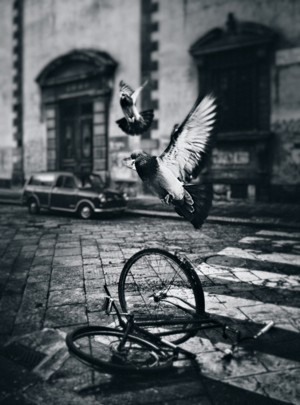 Pigeons at Verona, Italy by Dragan Todorovic