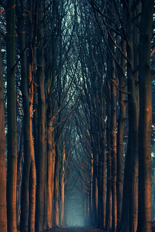 Perfect 6 AM walk near Bruges, West-Vlaanderen, Belgium. Photo by Mathijs Delva