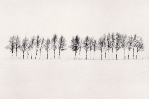 Twenty Four Trees, Abashiri, Hokkaido, Japan by Michael Kenna, 2005