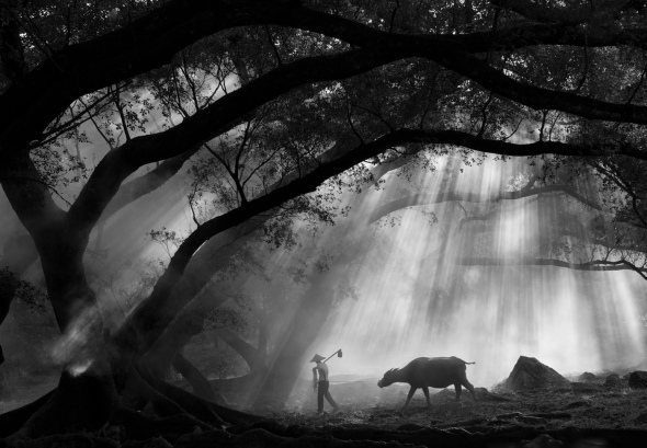 Banyan Tree in the Morning, China by Donghai Xia, 2012
